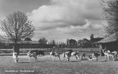 Boslaan Wandelpark 1965 Hertenkamp bij Stal