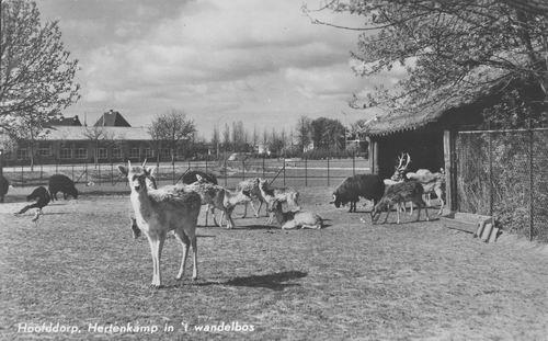 Boslaan Wandelpark 1967 Hertenkamp bij Stal