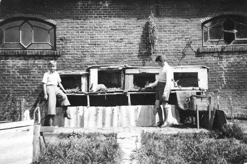 Calvelage Ben 1937 19__ bij Konijnen met broer Henk