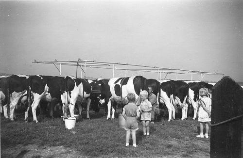 <b>ZOEKPLAATJE:</b>Calvelage Pijpers Onbekend 15 Kinderen bij Koeien Melken