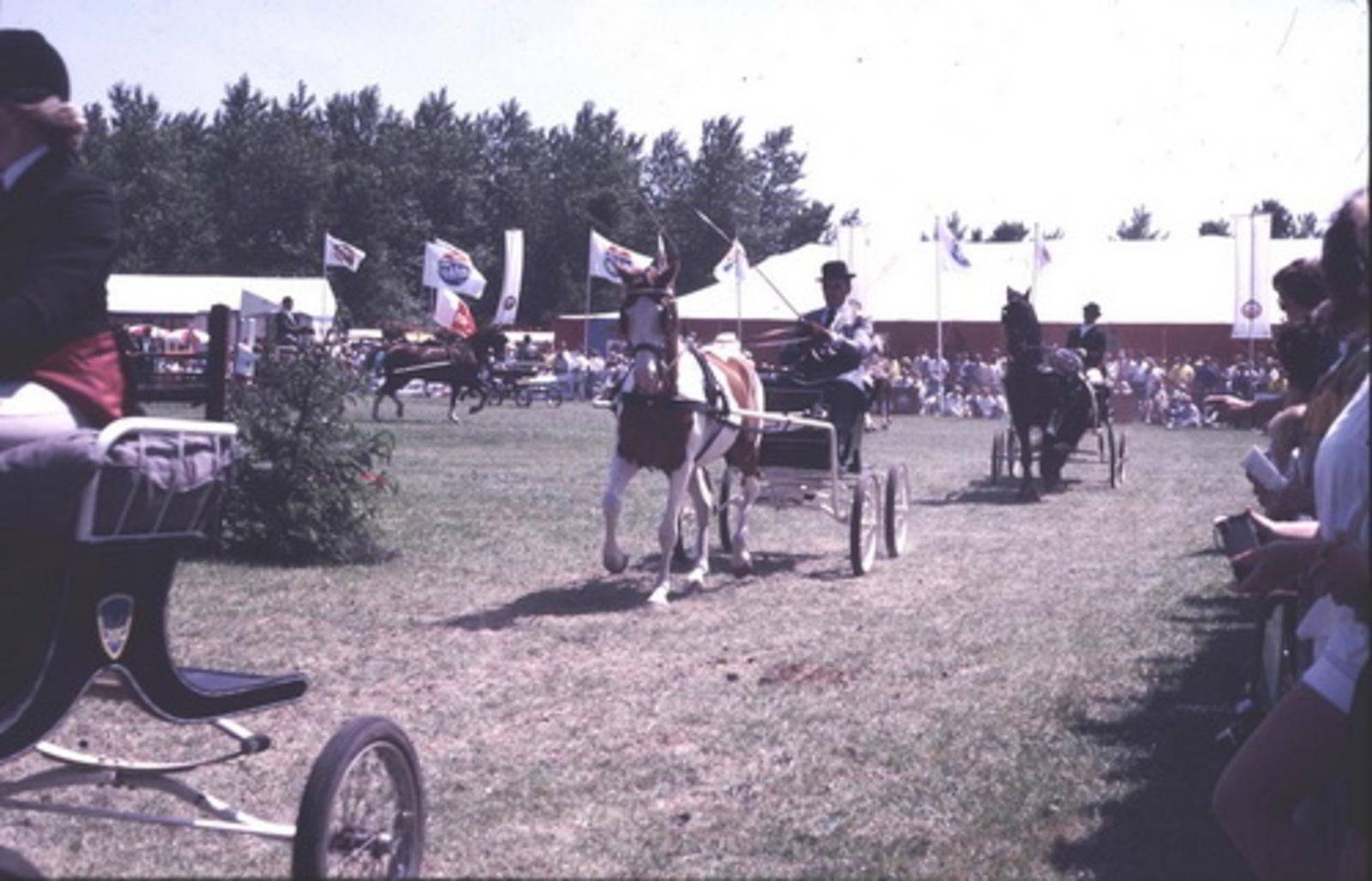 Concours Hippique 197_  Paard en Wagens 02