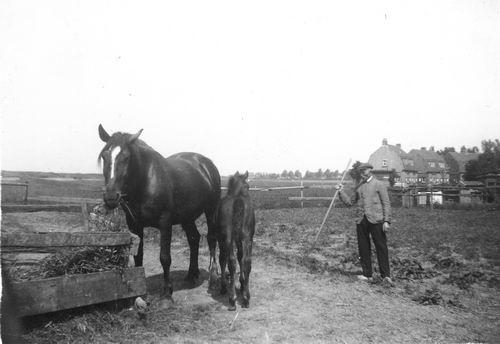 Hoofdweg W 0705 1949 met JB Calvelage bij paarden