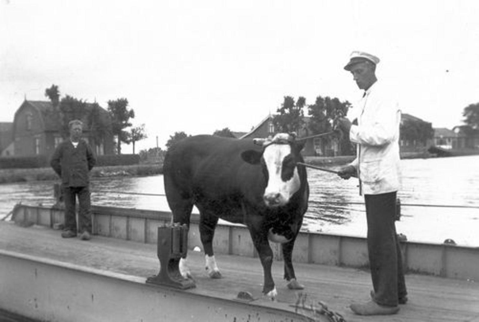 Huigsloterdijk 0395- 1938 Slachtvaars Seizoen