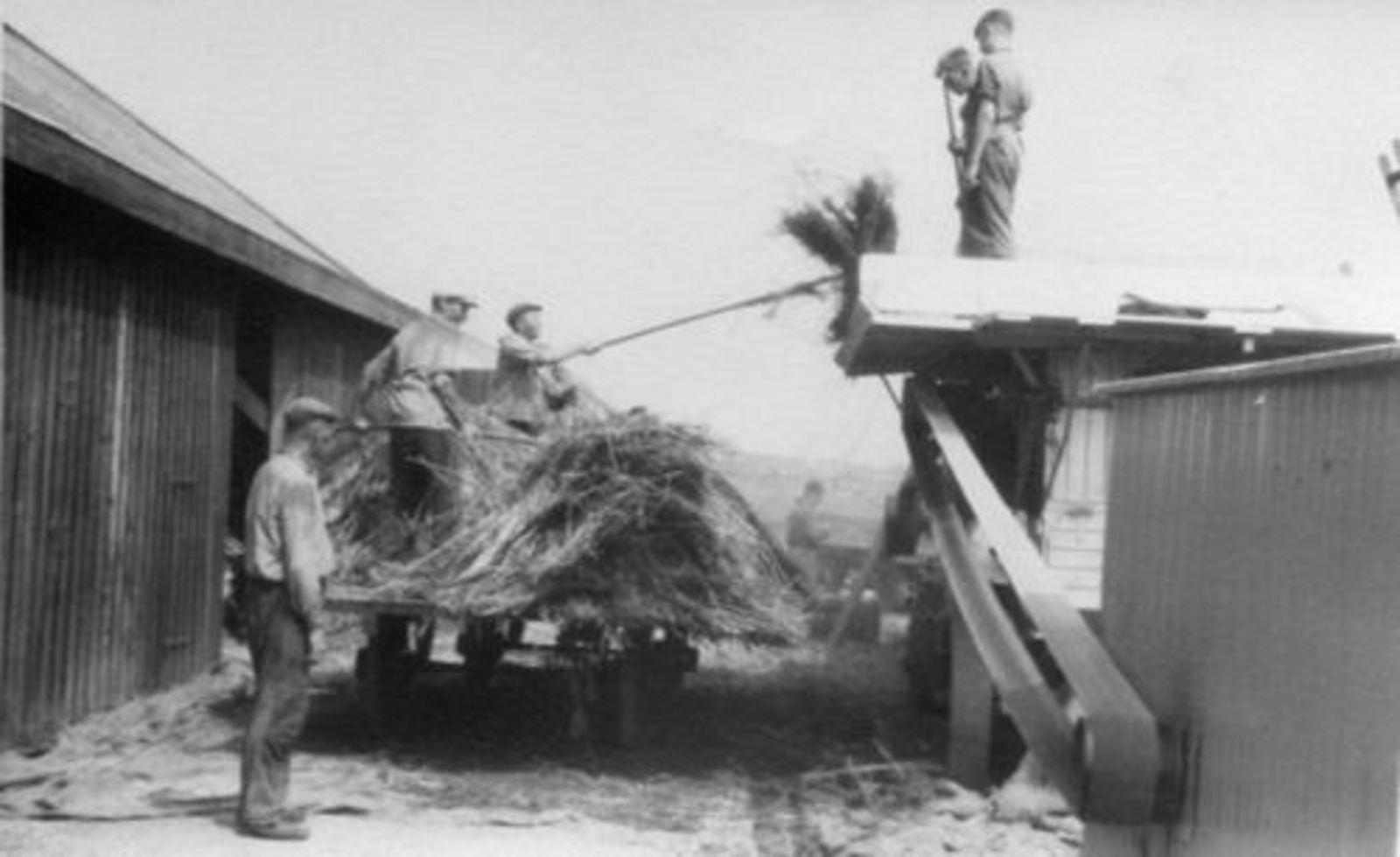 Karweioogst 1946± bij v Egmond 03 Karweizaad Dorsen