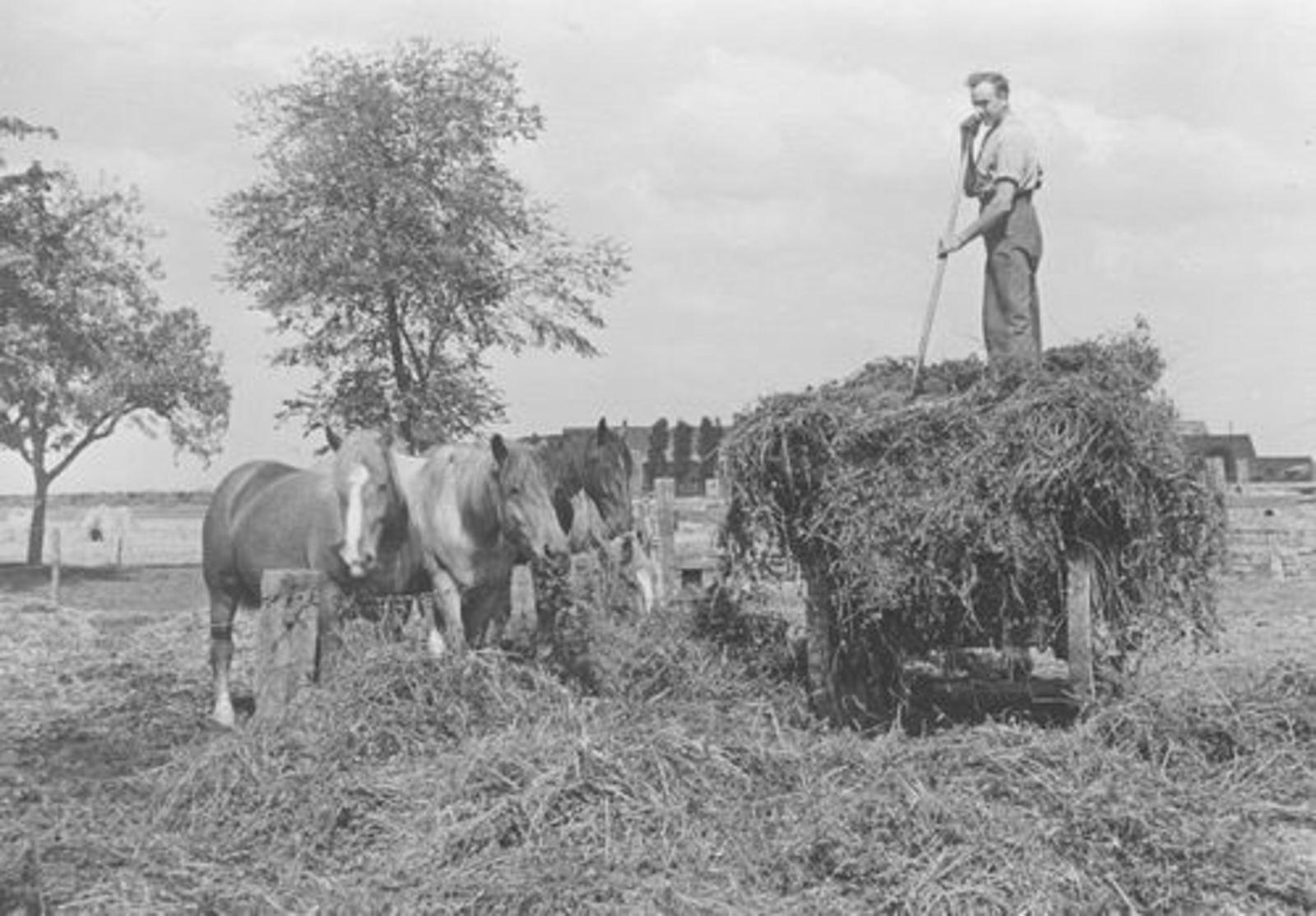 Koeckhoven Frans 1913 1945 08 Voert de Paarden