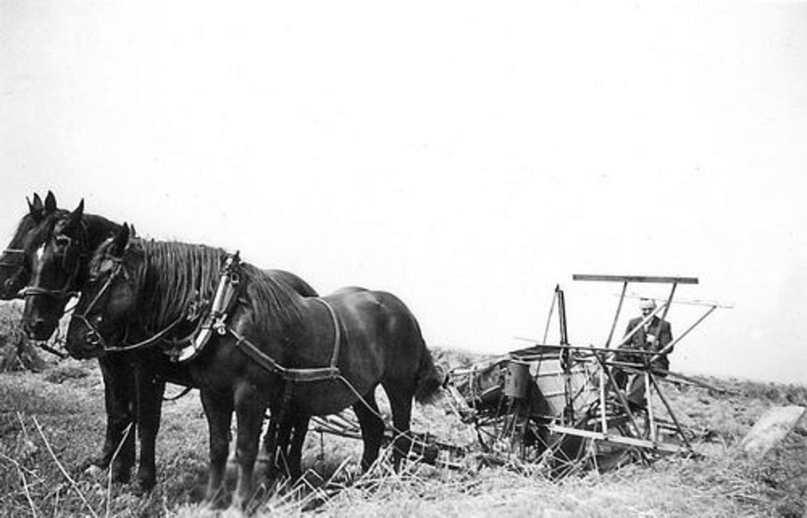Koeckhoven Frans 1913 19__ Korenmaaien met 3-Span