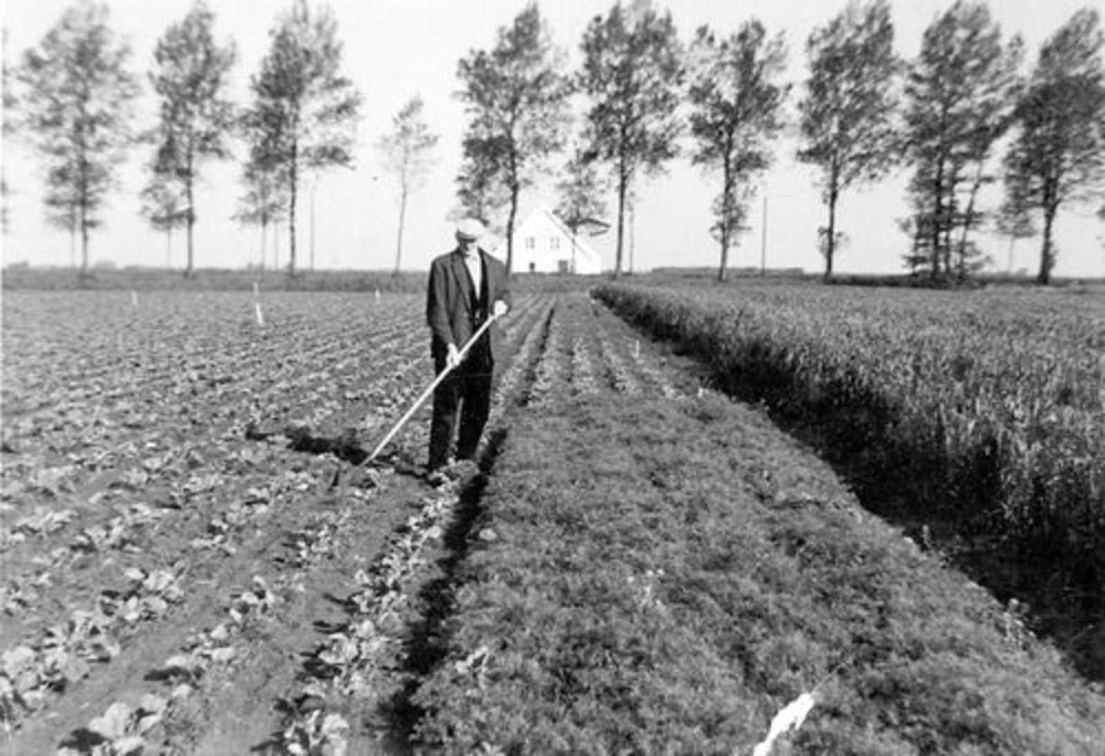 Koeckhoven Therus Janzn 1899 19__ Onkruid Schoffelen tussen Aardappels