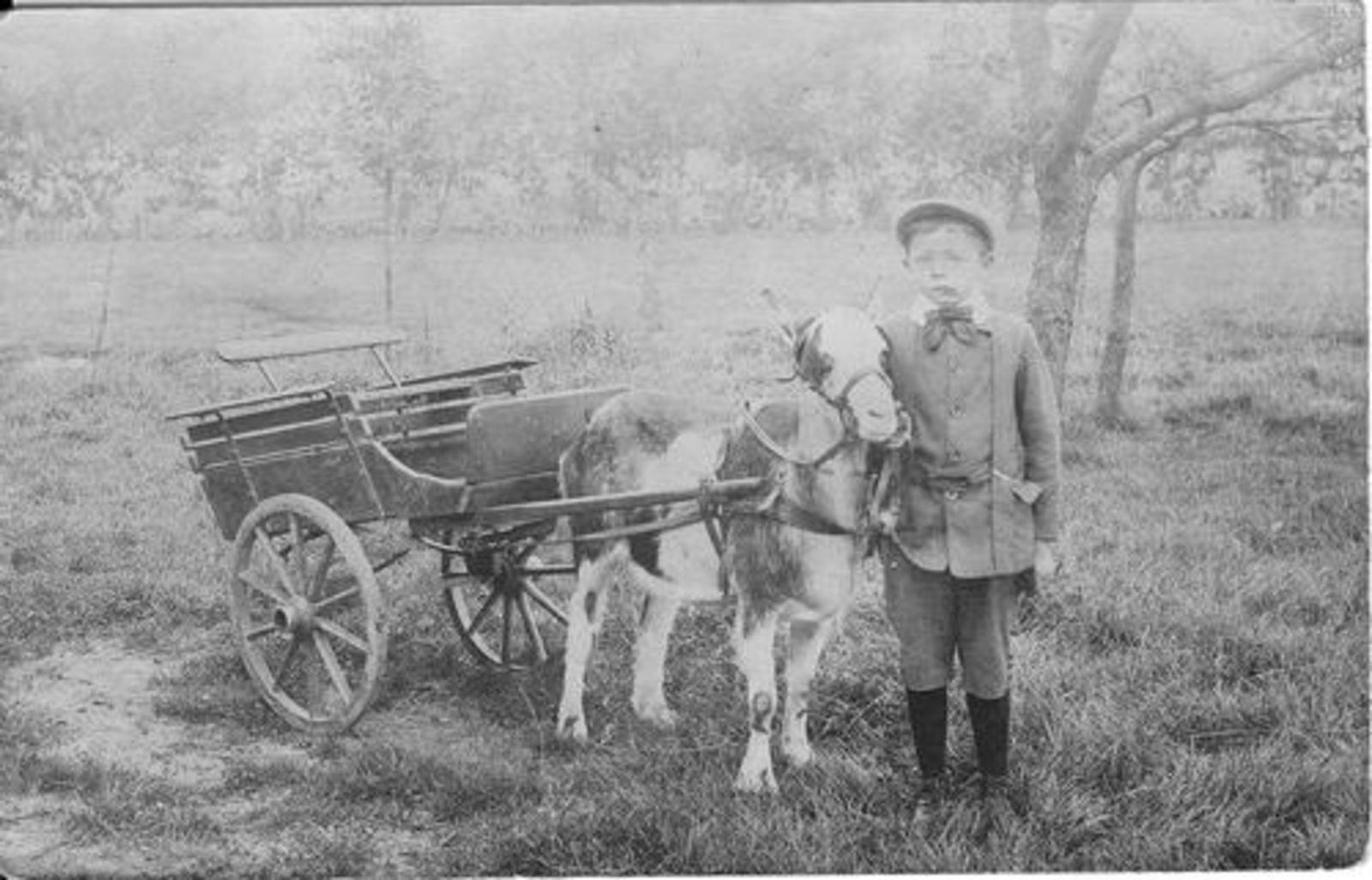 Koeckhoven Therus Klaaszn 1911 191_ met Geitenkar