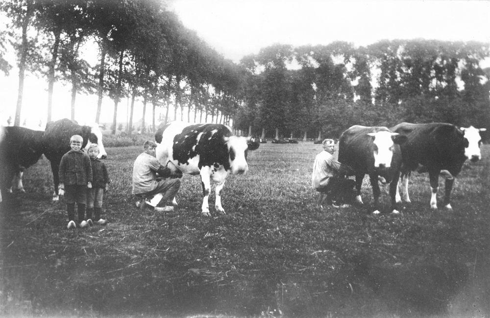 Poortvliet Daan 1916 19__ Onbekend 03 Koeien Melken