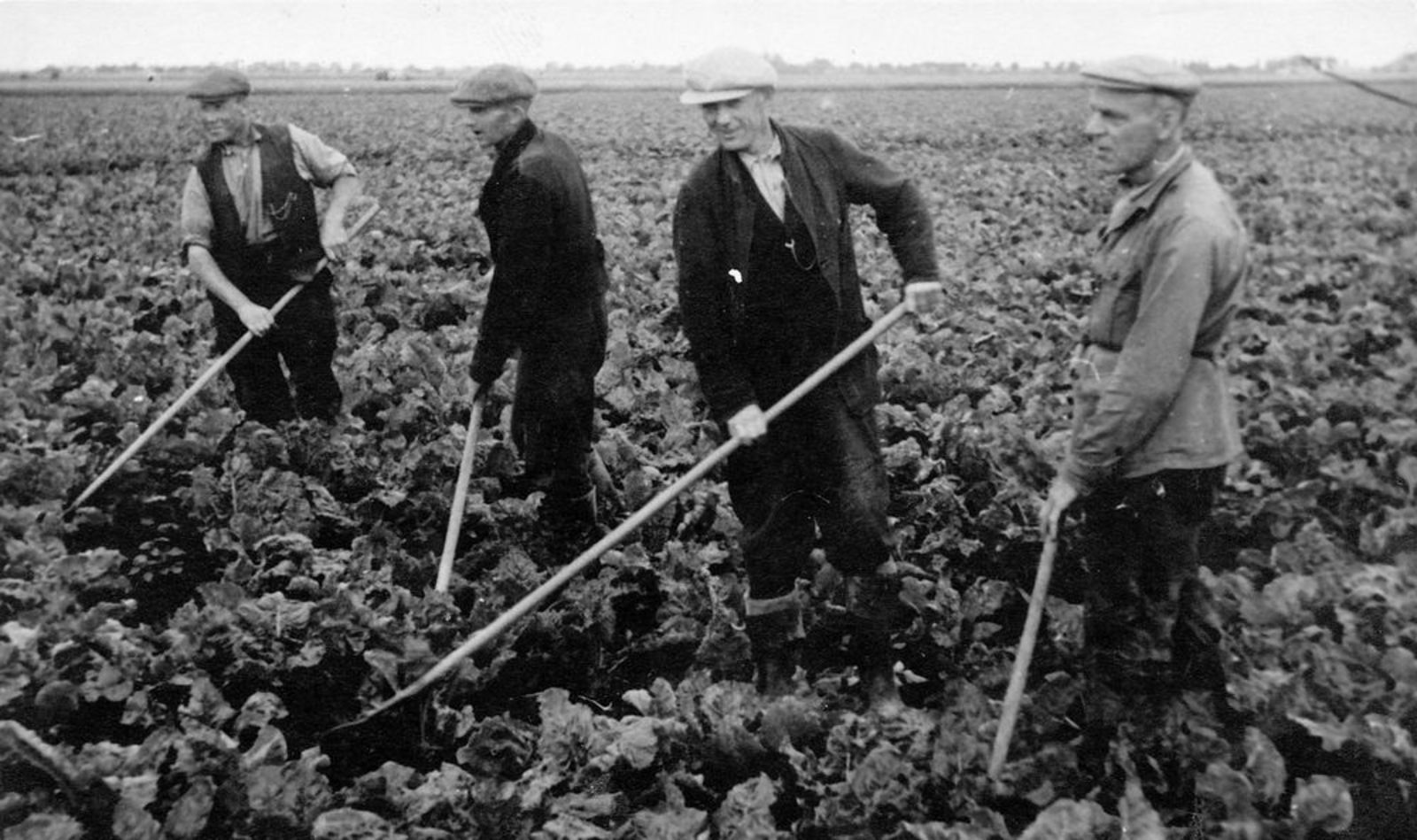 Smit Leendert 1898 1955 Bieten Onkruid Wieden bij Groenenberg aan IJweg