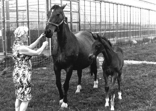 Vlieger Rie de 19__ met Paarden bij Kassen