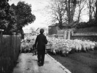 Whitford Lane, Mitcham, c.1890