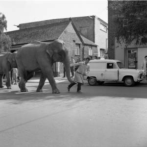 Elephants of Billy Smart's Circus with Handler in 1962