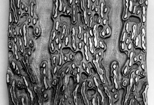 10 Leopard-Skin Printing-Block, c1900