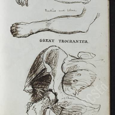 Notebook 1: Anatomical Ink Drawings