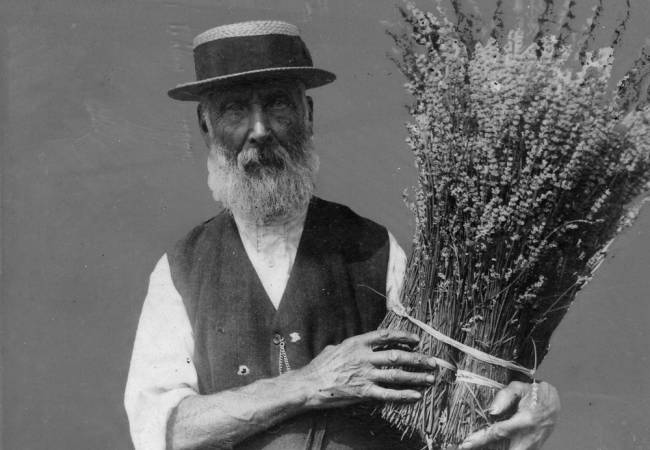 Mr Henry Fowler, the last of the lavender growers.