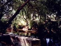 The River Wandle, Mitcham