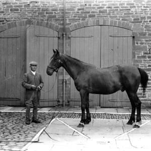 G36-543-08 Horse with handler in a yard.jpg