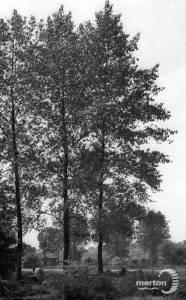 Carshalton Road, Mitcham