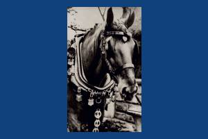 Jack the Trace horse, Wimbledon