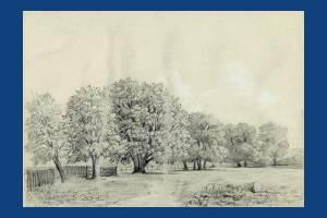Wimbledon Park: Pencil drawing