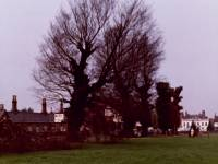 Fair Green, Mitcham: Felling ancient elms