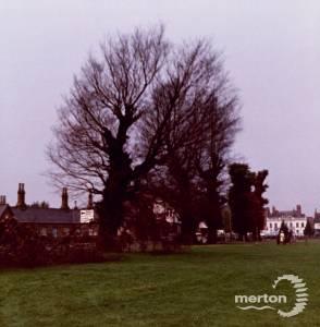 Fair Green, Mitcham: Felling ancient elms