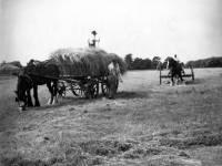 Haymaking on Wimbledon Common