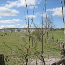 2010 View of the Site of the Former Lime Quarry Sewell