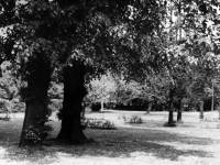 Morden Hall Park: The Rose Garden of Morden Cottage, looking East