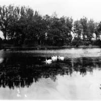 The Lake Waterloo