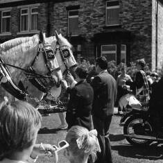Horses Taking Part In A Parade At The Corner Of Salisbury Street, South Shields