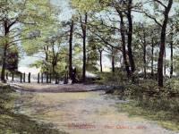 Footpath near Queensmere, Wimbledon Common, Wimbledon