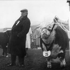 A man with a bull - Captain R.S. De Quincey.