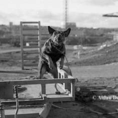Dog at Wearmouth Colliery Yard