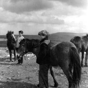 Two boys with two Welsh mountain ponies.