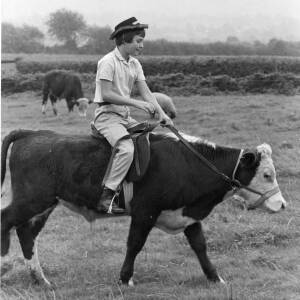 Penny Powell of Holmer, Hereford riding a bull.