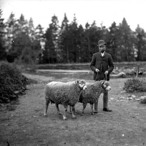 G36-543-09 Man with two sheep in a lane near a pine wood.jpg