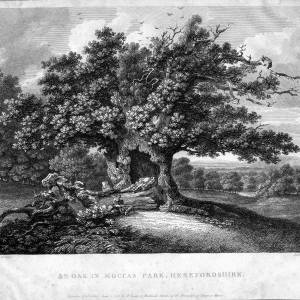 The Oak, Moccas Park, Herefordshire, print, 1798
