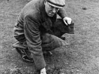 Damage to Mitcham golf greens