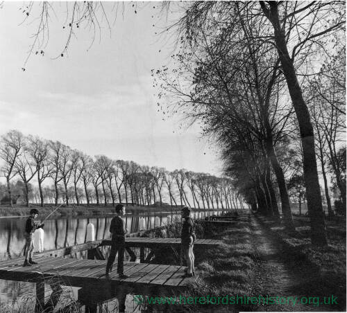 185 - Three boys next to tree lined river