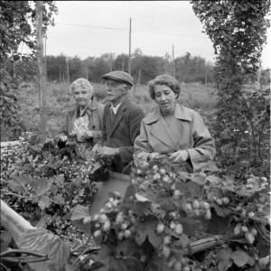 Hop Pickers - The Jones Family at Larport Farm, Frome Mordiford, Herefordshire, 1962