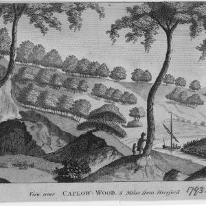 Caplow Wood, Herefordshire, print, 1793