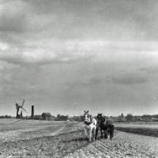 1910s Field Around the Windmill and Steam Corn Mill Houghton Regis
