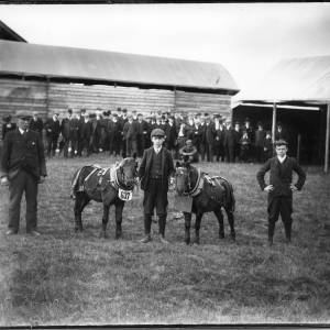 G36-042-02 Man and two boys with two small horses, one with first prize tag. Bystanders mostly men .jpg