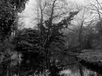 Wandle at Ravensbury Manor
