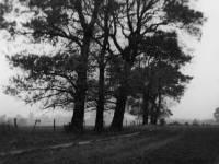 Field Path, Wimbledon