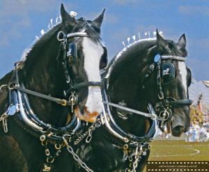 Dray horses, Mitcham Carnival