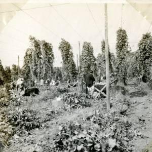 CJS021 Hop picking, c.1930s.jpg