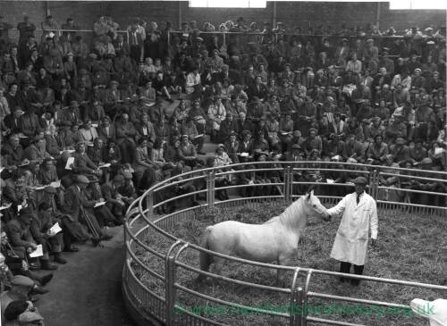 A horse in the showring at Hereford cattle market.
